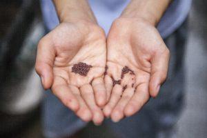 Graines dans des mains
